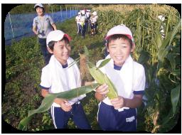 ミネラル野菜収穫
