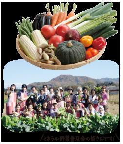 ミネラル野菜